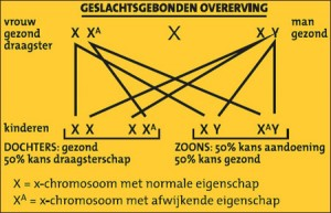 bron: www.kennislink.nl