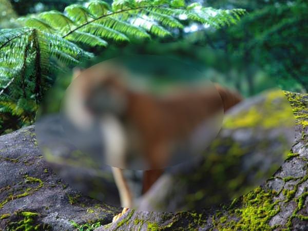 Een tijger in het bos door Chinese ogen.