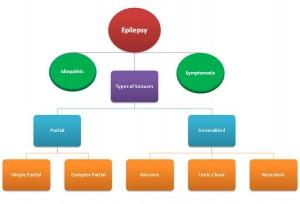 Epilepsy Flowchart