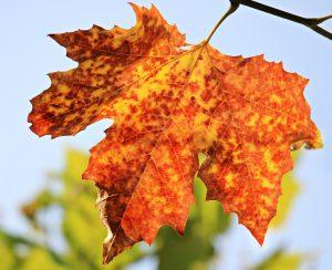 autumn-1638473_1280