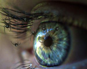 eye-451443_1280